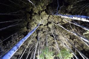 八千穂高原自然園イルミネーション