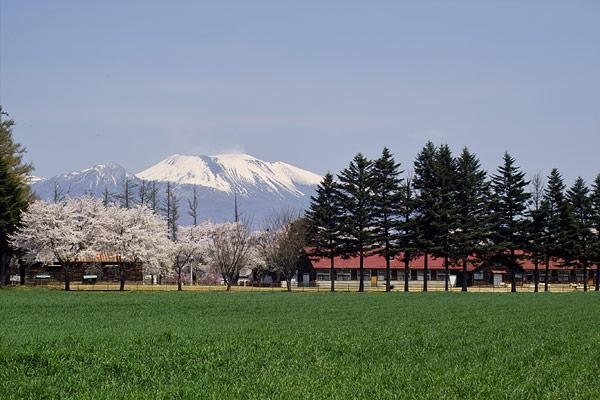 雪のある浅間山と満開の桜と牧場