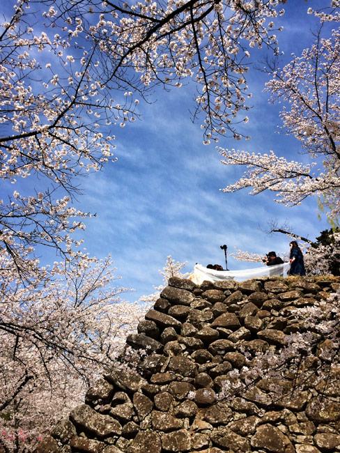 第3位「小諸城址 懐古園」石垣と桜の写真