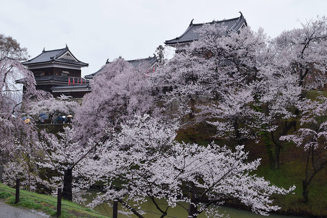 上田城と桜
