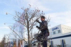 2本の木にイルミネーションを装飾していく職人Mさん